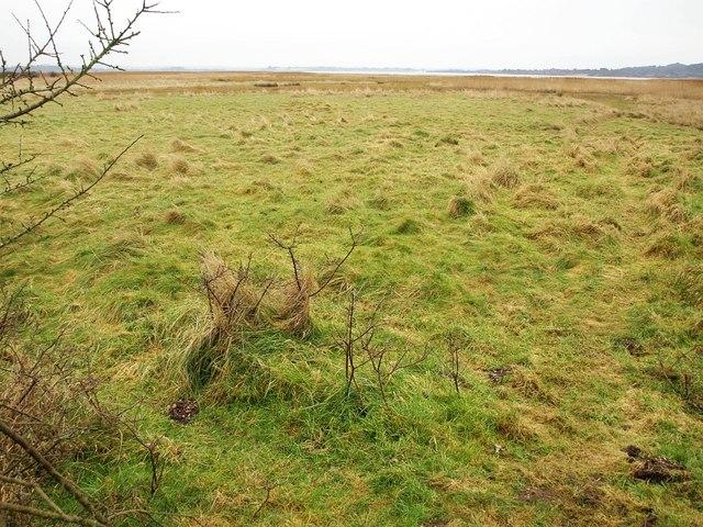 Meadow, Swineham Point