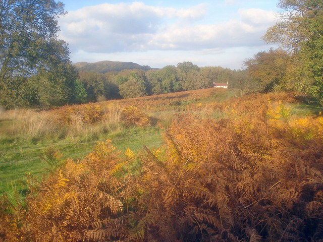 Autumn in Eastnor Park