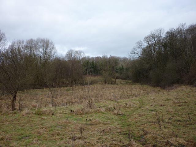 Rough pasture, Storth