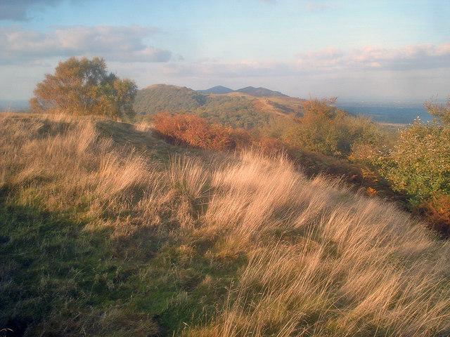Tall grass on top of Midsummer Hill