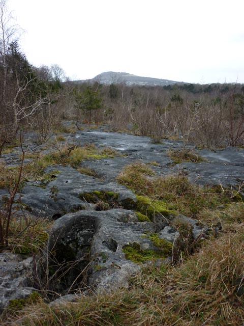 Limestone pavement, Longtail Wood