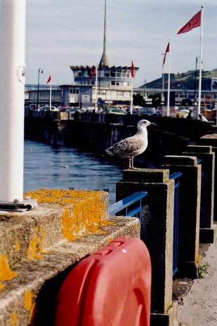 Douglas - Sea Gull and Sea Terminal