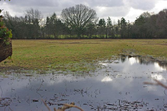 Waterlogged field, Smallfield