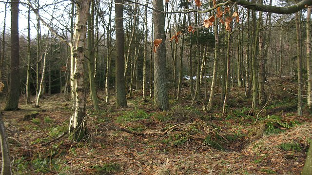 White Gate Wood