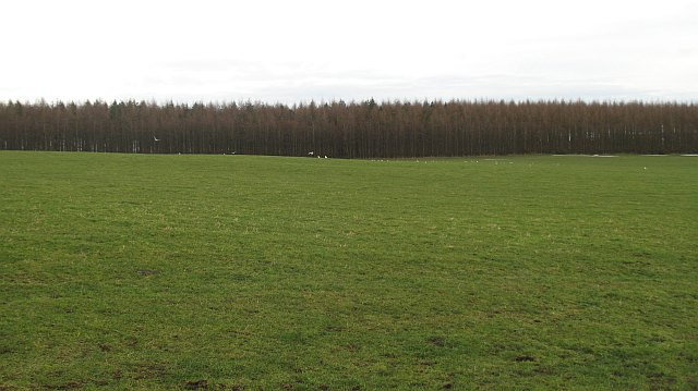 Grassland and gulls