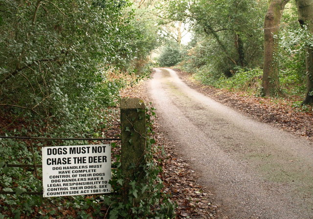 Dogs must not chase the deer