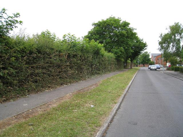 Cut hedge - Shooters Way