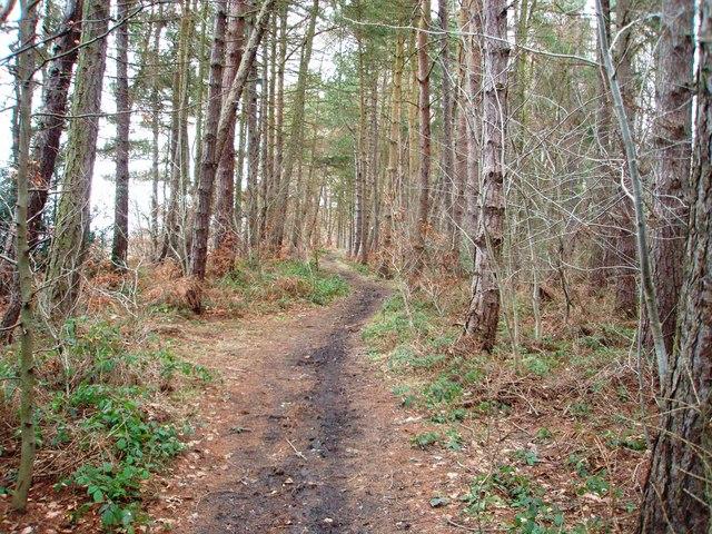 Woodland path near Lower Burtons