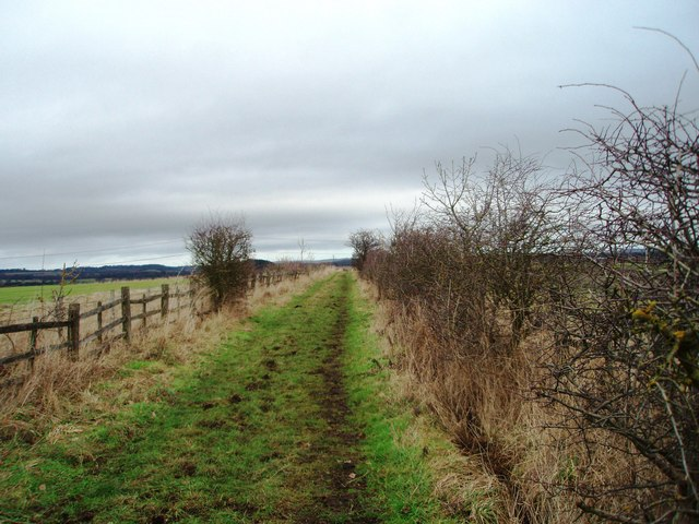 Track to Coldstream Wood