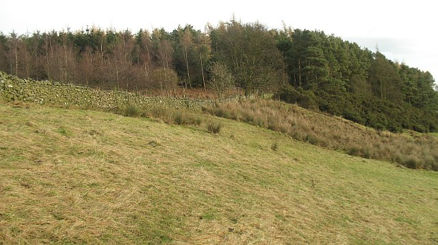 Roundel Wood