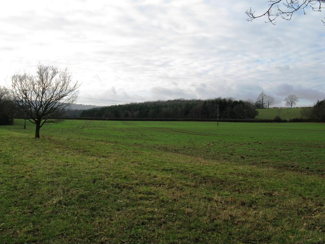 Looking over arable land to Walk Copse