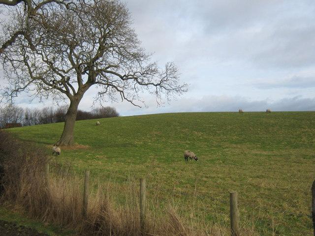 Tuft Hill Middridge County Durham