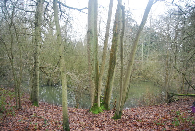 Pond in the woods, Penshurst Park
