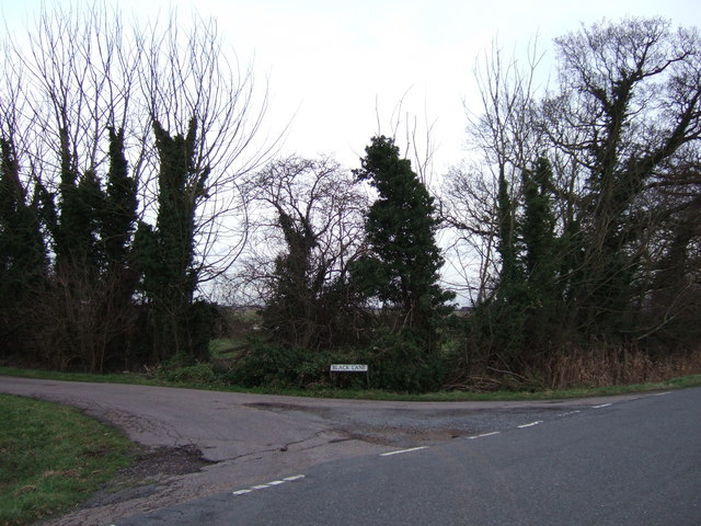 Black trees on Black Lane
