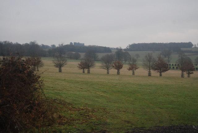 Avenue of trees, Penshurst Park