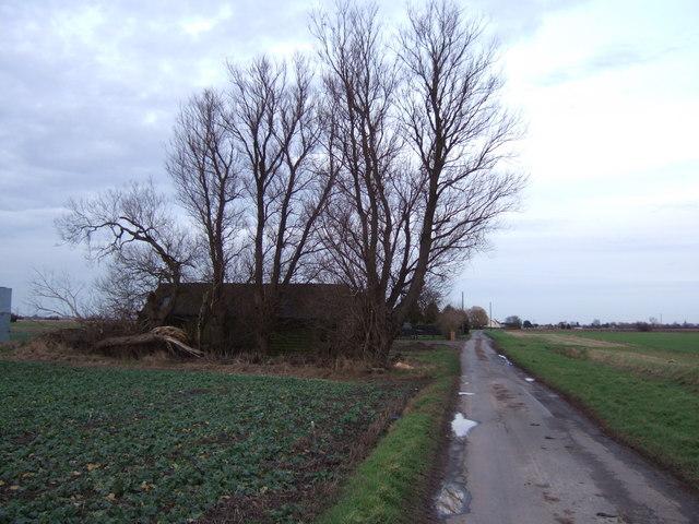 Trees on Goredike Bank