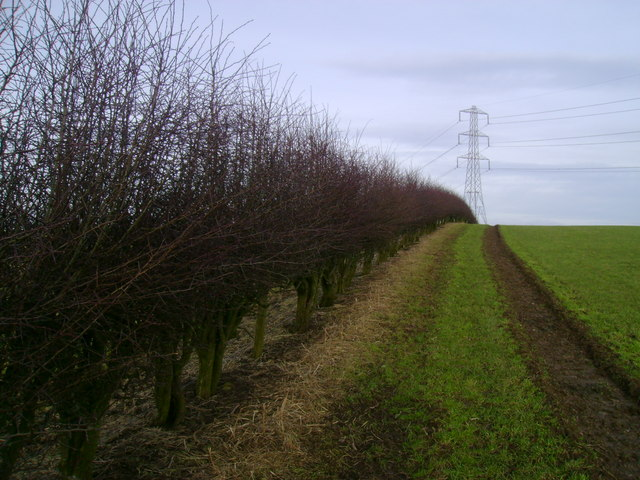 Hedgerow dividing fields