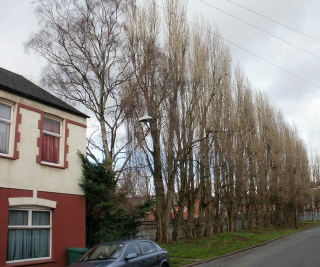 Henson Street trees, Newport