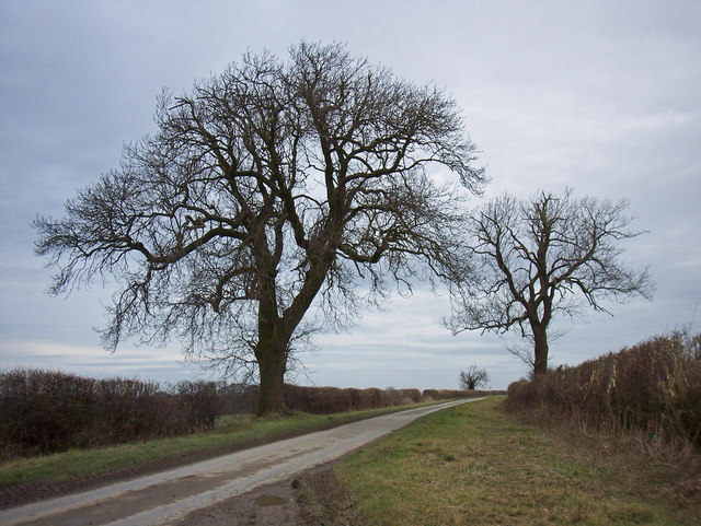 Middlegate near Saxby All Saints in January