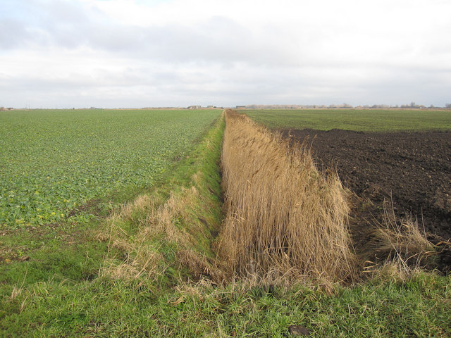 Reedy ditch at Mount Pleasant