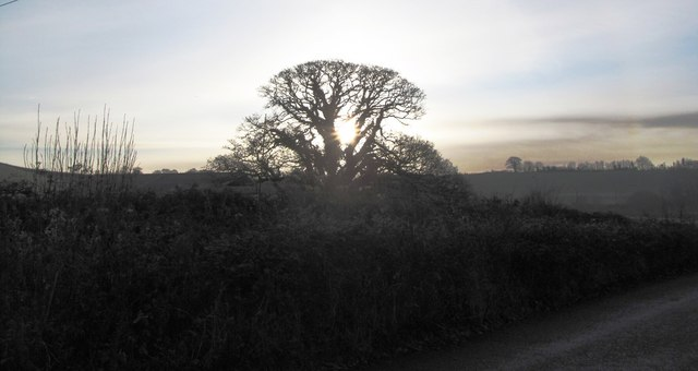 Tree by the road to Hungerford