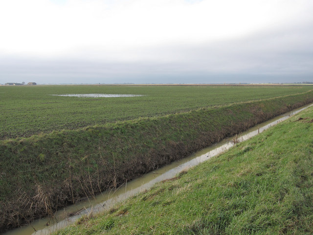 Standing water in the field
