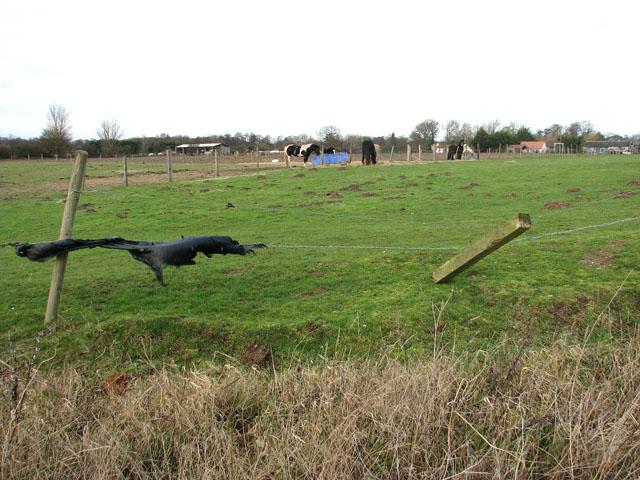 Horse paddocks south of Doles Farm