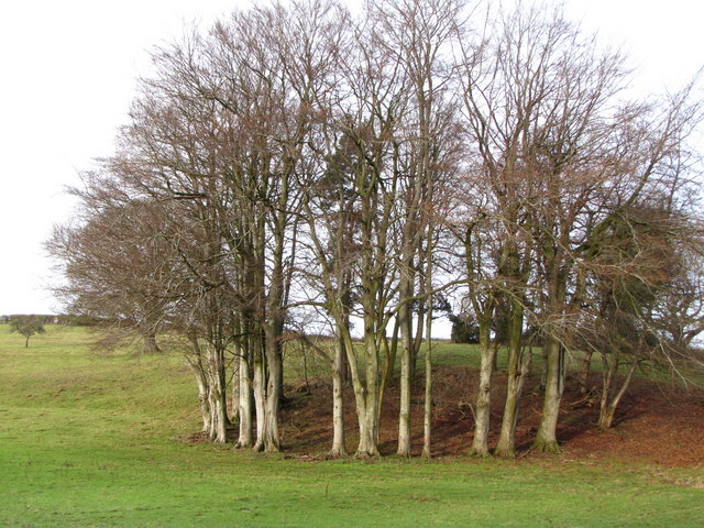 Clump of trees, approaching Croydon Hall