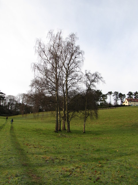 Small clump of trees, approaching Croydon Hall