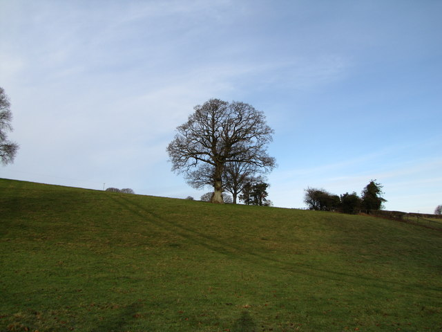 Tree on the horizon