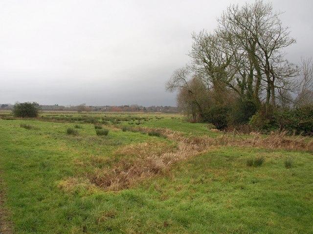 Meadow, Stoborough
