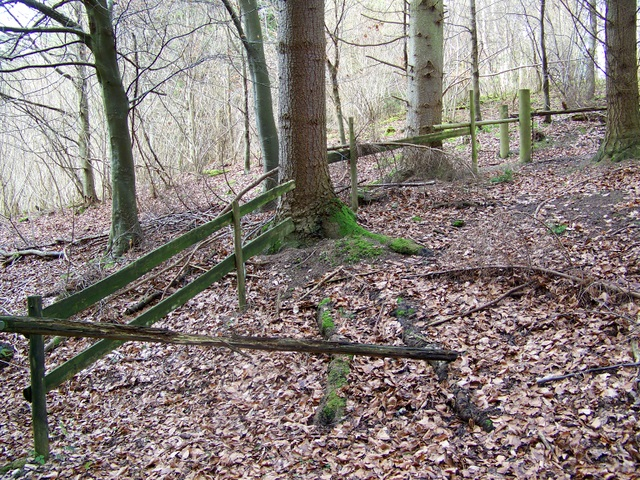 Old fence, Ashmore Wood