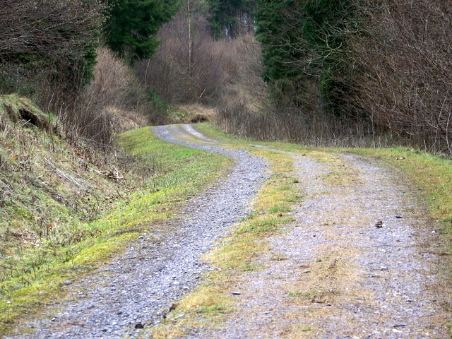Forestry track, Ashmore Woods