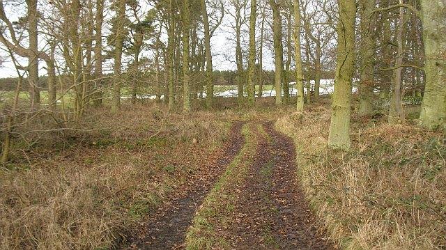 Strip wood, Marygoldhill Plantation