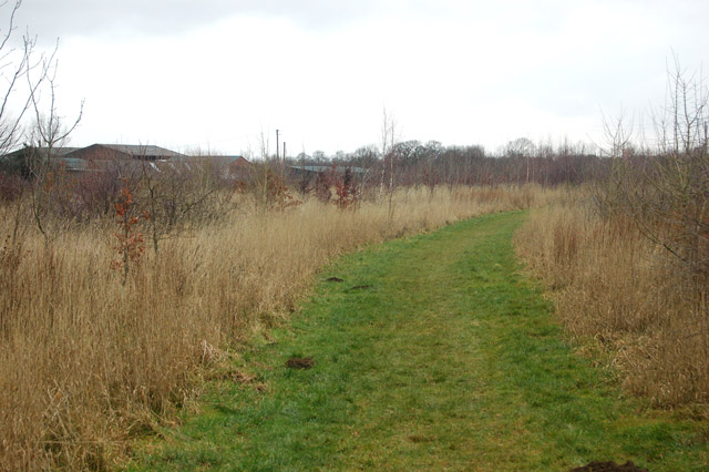 Looking northwest towards Tomlow Farm through a new plantation