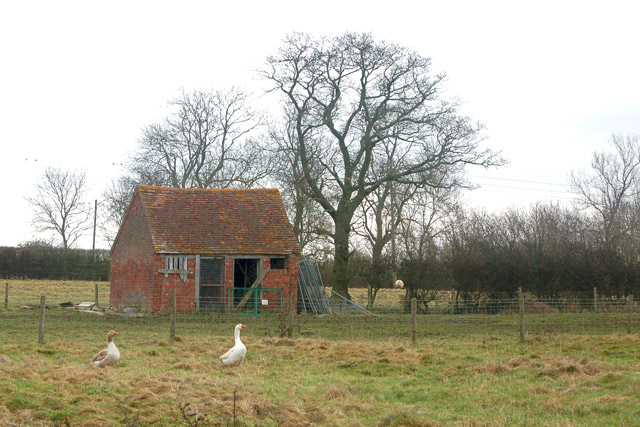 Geese and a shed on Sunnyside Farm, Tomlow