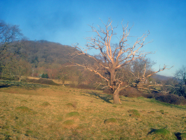 Meadow at Glenberrow - 1