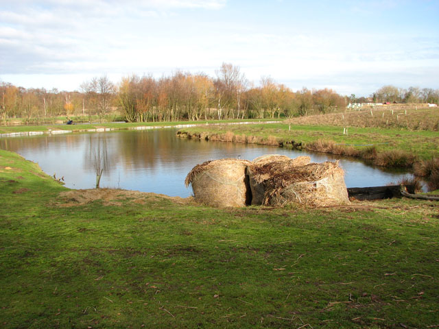 Fishing pond at Hall Farm Fishery