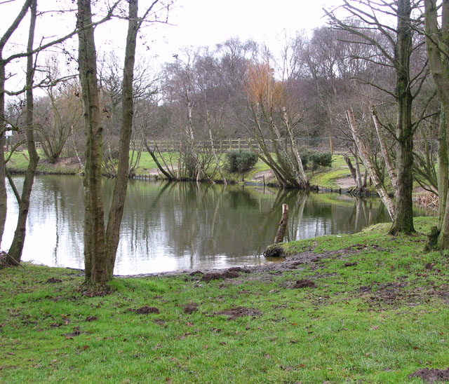 One of the fishing ponds at Hall Farm Fishery