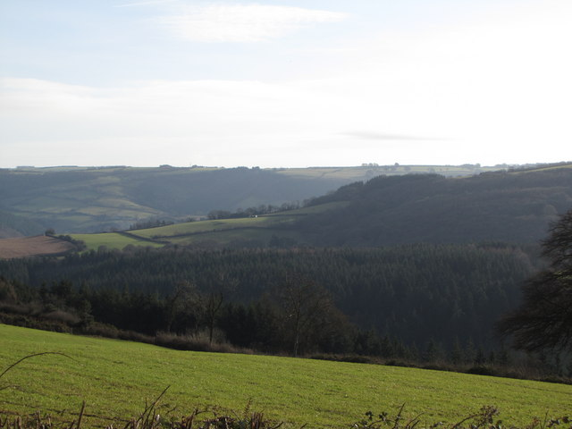 Looking across Beckway Wood from Stout's Way Lane