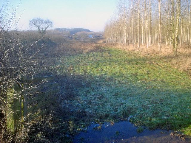 Plantation north of the M50