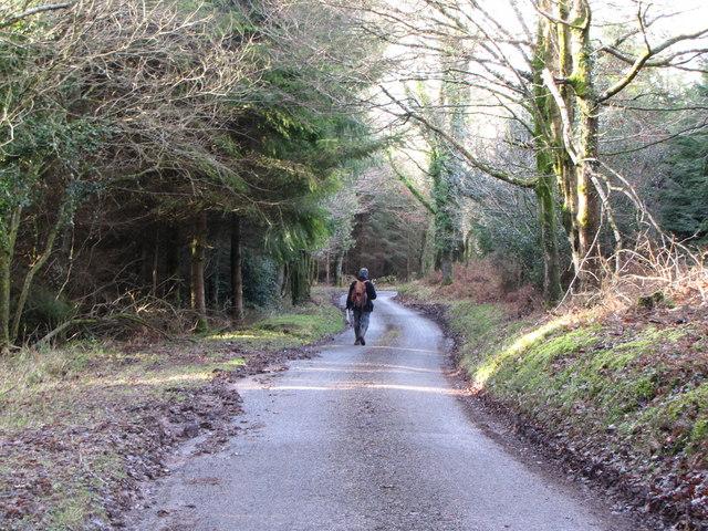 Stout's Way Lane through Slowley Wood