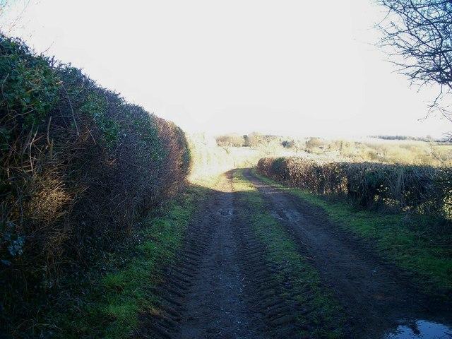 Bridleway to Dean