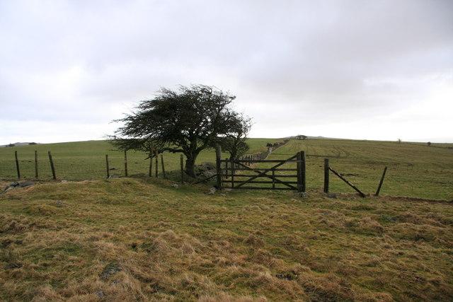 Hedge Down