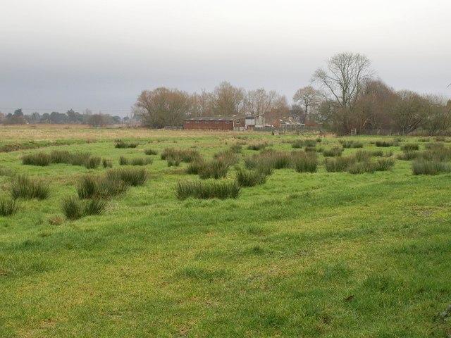 Water meadow, Stoborough