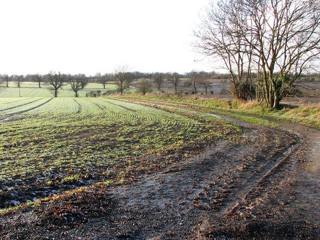 Track into fields west of Cross Lane