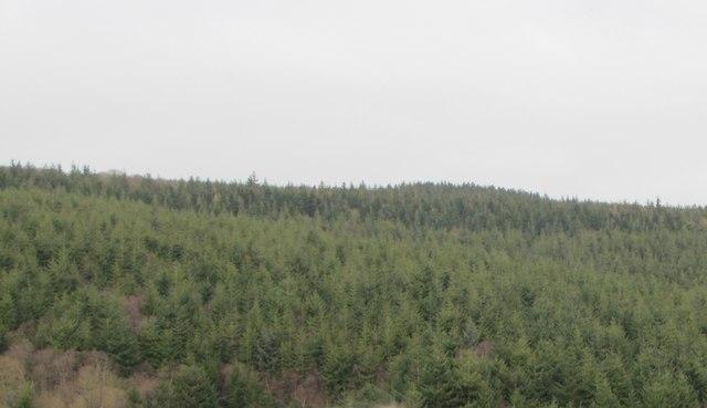 Monkham Woods
