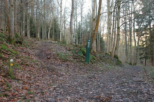 Path junction in Lindinny Wood, Yair