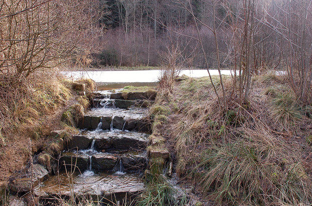 Pond in Lindinny Forest