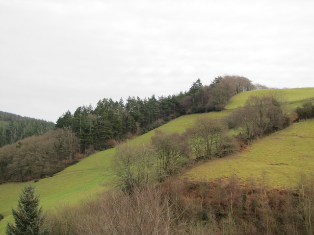 The edge of Birchen Wood
